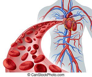 coração, sangue, circulação
