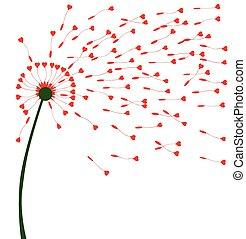 coração, sementes, dandelion