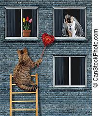 coração, seu, gato, noiva, rubi, dá