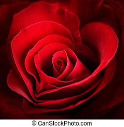 coração, valentine, rose., vermelho, dado forma