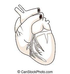 coração, vetorial, cão, ilustração