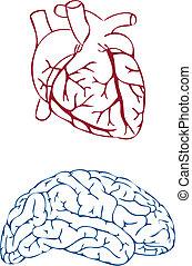 coração, vetorial, cérebro