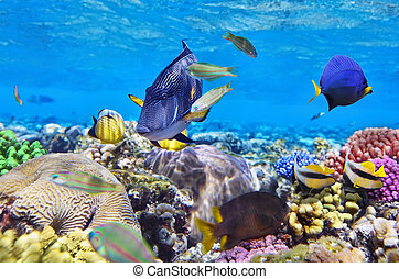 coraal, en, visje, in het rood, sea.egypt