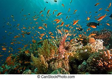 coraal, oceaan, en, visje