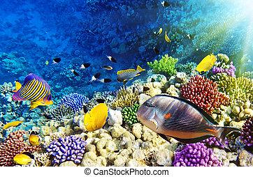 coraal, sea.egypt, visje, rood