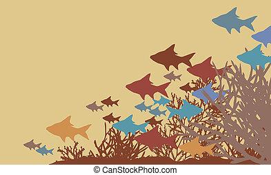 corail, fish