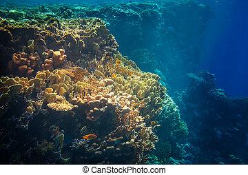 corail, récif