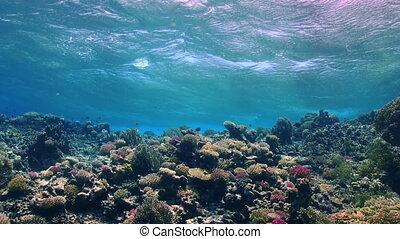 corail, sur, mer, récif, vagues