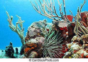 corais, cozumel, superfície, contra, méxico