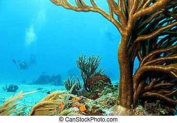 corais, fundo, cozumel, mergulhadores, méxico