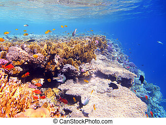 Coral and fish in the Red Sea