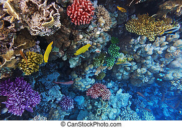 Coral and fish in the Red Sea.Masked butterfly.Egypt