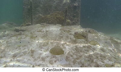 Coral and little fish Key West Florida underwater -...