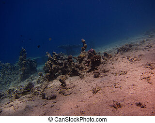 coral at the bottom