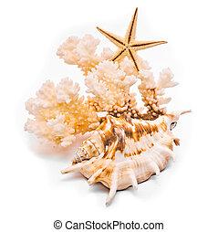 coral, blanco, aislado, plano de fondo, starfish.
