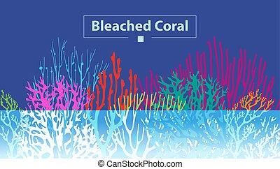 Coral Bleaching occurs rising sea temperatures