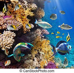 coral, colonia, pez