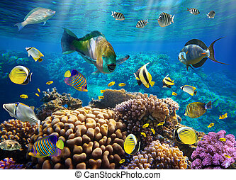 Coral colony and coral fish - Photo of a tropical Fish on a...