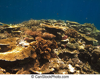 Coral Colony on Great Barrier Reef Australia