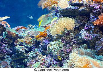coral, colorido, arrecife