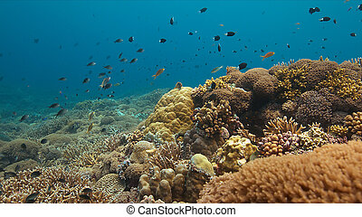 coral, colorido, filipinas, arrecife
