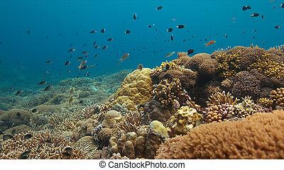 coral, coloridos, filipinas, recife