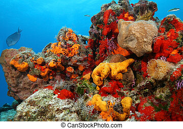 coral, -, cozumel, recife