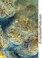 coral de cuero