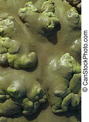 coral de cuero, superficie