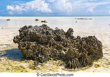 coral, duro, polinesia francesa, playa, pedregoso