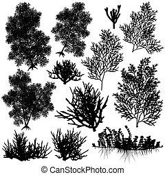Set of editable vector sea coral silhouettes