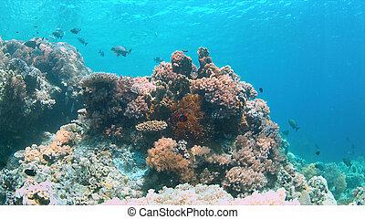coral, filipinas, apo, arrecife, arrecife
