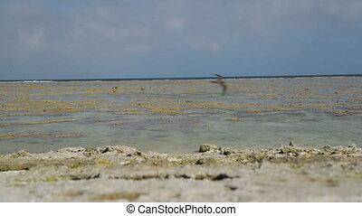 Coral-Filled Beach, Lady Elliot Island