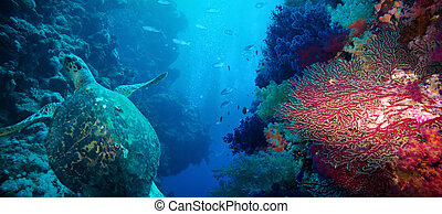 Coral, fish and turtle