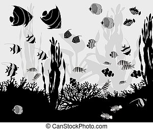 Coral fish - Different species of coral fish, algae and...
