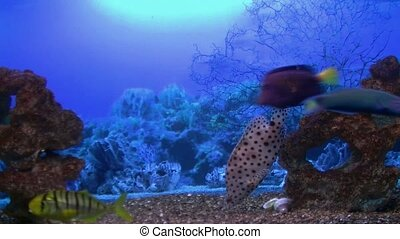coral fish swim in the environment