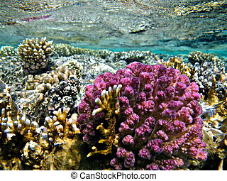 Coral Garden on the water surface