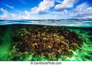 Coral garden underwater