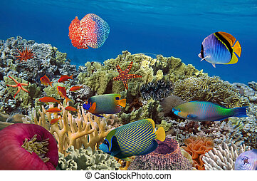 Coral garden with starfish