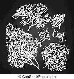 coral, gráfico, colección