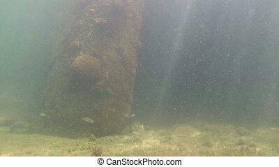 Coral growing on a pillar underwater Florida Keys - Coral...