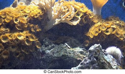 Coral in Fish Tank