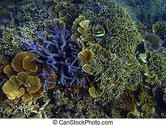 Coral in the Pacific.