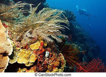 coral, indonesia, pared, por, buzo, bunaken