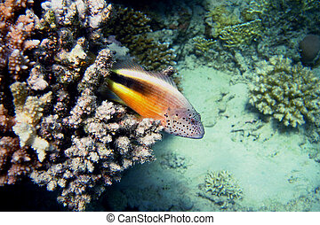 coral keeper in the sea
