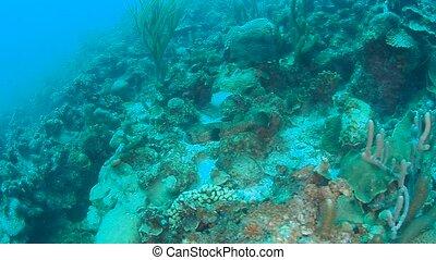 coral life caribbean sea Bonaire island underwater diving