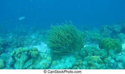 coral life caribbean sea underwater 1080P video