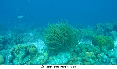coral life caribbean sea underwater 1080P video