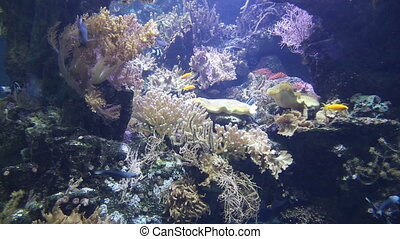 coral life underwater