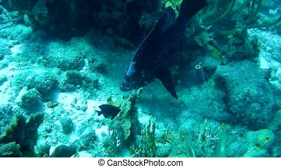 coral life underwater video 1080p Caribbean Sea